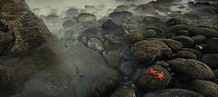 Amor estrellado (Francesc Candel) Tags: love amor starfish mar rocks estrellamar sea nature naturaleza