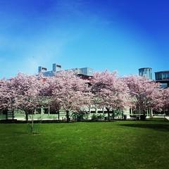 . (tsienni) Tags: blue sky flower architecture campus spring europe university sweden stockholm universitet vår