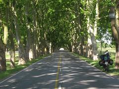 Tunel de Pltanos (danielpgauer) Tags: road southamerica ruta uruguay carretera route estrada platanos americadosul carmelo rodovia uruguai coloniadelsacramento ruta21