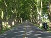 Tunel de Plátanos (danielpgauer) Tags: road southamerica ruta uruguay carretera route estrada platanos americadosul carmelo rodovia uruguai coloniadelsacramento ruta21