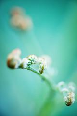 flickr_150527_02 (est150311) Tags: japan sony nara a900