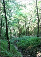 . (zioWoody) Tags: verde green promenade gnomo bosco passeggiata sottobosco deepgreen gnomi bagnodiromagna