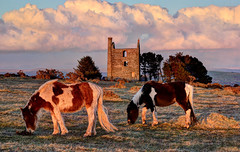 Grazing ponies on Bodmin Moor, Cornwall (Explored) (Baz Richardson (trying to catch up!)) Tags: cornwall ponies wildponies bodminmoor minions tinmines coppermines explored enginehouses southphoenixmine heritagecentres