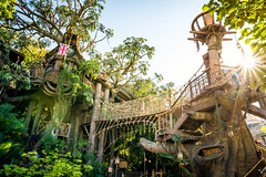 Tarzan's Treehouse (Tyler Bliss) Tags: bridge cruise family sunset sun tree classic nikon warm dusk disneyland swiss wide sigma disney treehouse explore jungle tropical sunburst walt tarzan robinson attraction adventureland tylerbliss tylerblissphotography