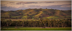 Rolling hills of Victoria, Australia (Chas56) Tags: trees sunset green rural canon wow landscape farm hill wide australia wideangle victoria farmland hills ranges australianlandscape australiana greatdividingrange pyalong canon5dmkiii