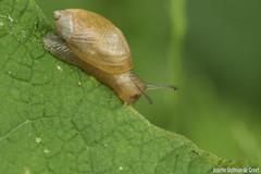 DN9A8795 (Josette Veltman) Tags: macro nature canon bug natuur bugs photowalk lente zwolle landschap insecten ivn westerveldsebos photowalkzwolle