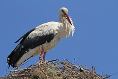 """storch_balz • <a style=""""font-size:0.8em;"""" href=""""http://www.flickr.com/photos/137809870@N02/27193346356/"""" target=""""_blank"""">View on Flickr</a>"""