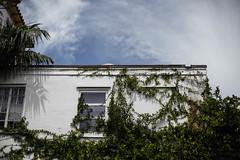 IMG_4776 (zumponer) Tags: sky sunlight plant building canon florida fullframe dslr palmbeach canon5dmarkii