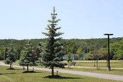 IMG_1843 (GabrielBlaisD) Tags: new summer ontario canada liskeard