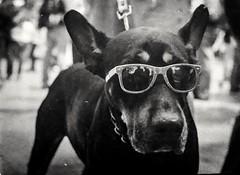 Cool Dog (MauroLaScalea) Tags: bw dog pet film 35mm glasses minolta kodak venezuela grain caracas 101 400 newbie expired amateur 58mm minoltasrt101 beginner srt