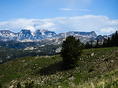 What A View This Tree Has.. (cutthroatsrule) Tags: snow tree pine peak beartooth