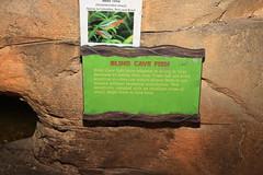 Canon184708 (godrudy6661) Tags: neworleans botanicalgarden citypark blindcavefish neontetra paracheirodoninnesi theconservatoryofthetwosisters tropicalrainforrestexhibit