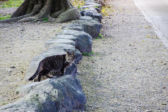 Today's Cat@2015-04-30