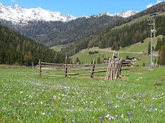 In und um  St. Gertraud (S. Gertrude in Val d'Ultimo)  im Ultental  (Val d'Ultimo) in Sdtirol (AltoAdige) - Italien (warata) Tags: italien italy alps church kirche alpen sdtirol altoadige southtirol 2015 ultental valdultimo santagertrude stgertraud baudenkmale historicarchitecturalmonument sgertrudeinvaldultimo