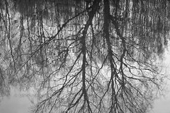 (minna-L) Tags: trees shadow reflection tree water canon finland river spring shadows riverside branches 60d