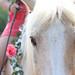 Madison Grove Farm Horses
