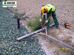 RETIRADA ANTIGUOS POSTES COMUNICACIONES ADIF - REGENERACIO FORESTAL  S.L. - LINEA MURCIA AGUILAS F3 (JOAQUIN PERALES MARTINEZ - REFOR S.L.) Tags: ave ferrocarril renfe medioambiente forestales fgv forestal jardineria biodiversidad feve cortafuegos adif infraestructuras ecosistema obraspublicas fitosanitarios enagas desbroce aenor herbicida redelectrica silvicultura maquinariaforestal refor agroforestal controldeplagas trabajosforestales lineaaltavelocidad maquinariaagraria franjadeseguridad trabajosagricolas avemadridvalencia mantenimientoinfraestructuras forestalsl reforsl controlerosion joaquinperalesmartinez regeneracioforestalsl prevencionincendiosadif prevencionincendiosforestales prevencionincendiosferrocarril incendiosferrocarril limpiezavegetacion limpiezapasosdeagua lineaferrocarril controldelavegetacion controlvegetacion prevencionincendiosforestalesadif prevencionincendiosimagenes estabilizaciontaludes estabilizaciondetaludes aveadif desbrocemecanizado maquinariajardineria trabajostragsa regeneracionforestal prevencionincendiosforestaleslineaaltatensin cortafuegosredelectrica prevencionincendiosredelectrica prevencionincendiosforestalesredelectrica cortafuegoslineaaltatension maquinariatratamientosfitosanitarios biocidas defoliacionquimicavegetacion limpiezacauces mantenimientoferrocarril selvcultura prevencionincendiosforestalesgeneralitatdecatalunya controldeplagasurbanas pilotoseguridadadif omioperariomaquinariainfraestructura limpiezacunetas recursopreventivo controlvegetacionferrocarril prevencionincendioslineaaltatensin