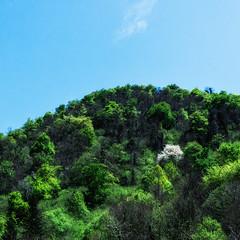 L'orgueilleux (Collabois) Tags: nikon cairn chemin mousse pyrnes fes fougres d600 randonnes baronnies dryades gourguedasque