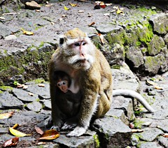 Mother and Child (diamonds_in_the_soles_of_her_shoes) Tags: monkey teampilipinas