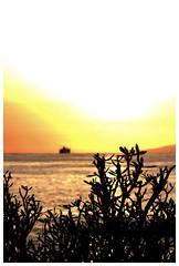 Tenerife (dreams of the earth) Tags: world las blue sunset red sky mer fleur animal sport rock montagne plante volkswagen de island la soleil fly photo los airport pub nikon eau mare earth colonial hard coucher cte du ciel le tenerife ryanair nuage bateau paysage vague canaries extrieur arbre plage americas oiseau paradis vulcano palmier calme papagayo garachico coccinelle lezard lzard rivage aircooled nostrum caleta gigantes ocan cristianos beauvais surraliste littoral vhicule bordure