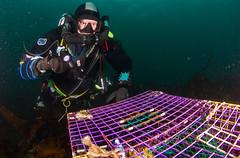 IMG_8887 (Josh.Cummings) Tags: ocean divers dive newengland diving ann cape drysuit rockport rebreather ccr cummings revo coldwater rockportma nitrox joshcummings joshuacummings nategarrett joshcummingsunderwater newenglanduwphotographywater capeanndivers jrcummings