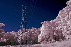 Spectral power 3 (OzzRod) Tags: power pentax infrared pylons k5 glenrock falsecolour hoyar72 720nm autotakumar35mmf23