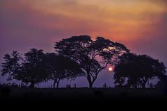 Mystical Sunset (mk mahi photography) Tags: life sunset sky silhouette canon twilight dusk mystical bangladesh rajshahi 70d