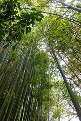 Barbara Hepworth Museum (Pippa Robins) Tags: cornwall bamboo stives barbarahepworth barbarahepworthmuseum