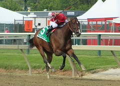 Go Maggie Go! (Chelsea188) Tags: blackeyedsusanday gomaggiego stakes black eyed susan animal horse filly silks jockey man rider sport action fast speed race compete run running stride gallop five win winning winner victory pimlico baltimore maryland bay equine athlete thoroughbred