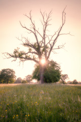 2016 Eades - Last Spark (Birm) Tags: worcestershirewildlifetrust summer evening eadesmeadow june meadow field flower grass wild tree outdoor landscape sony dead brnaches flare sun