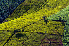 Landscape (Fevzi DINTAS) Tags: world life trees light holiday nature field landscape thailand amazing asia colours shadows farm curves places visit land moment agriculture nationalgeographic destinations ytavel paza140