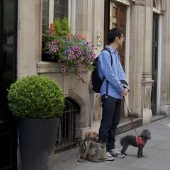 Doggie Bag (IanAWood) Tags: london streetphotography knightsbridge urbanlife summerinthecity walkingwithmynikon nikondf nikkorafs58mmf14g