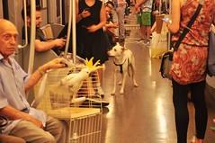 another day on the Milan metro (pantoniades) Tags: dog bird metro subway milan italy transit