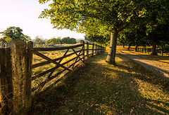 Late summer (MixPix ) Tags: farm gate late summer countryside bedfordshire uk landscape trees perspective shadows hyperfocal