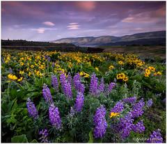 Columbia_Gorge-2015-12 (LermanPhoto) Tags: oregon sunrise columbiagorge tommccallpreserve