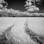 IR in the Yorkshire Wolds 3
