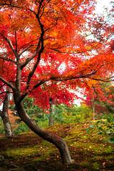 Autumn (Patrick Foto ;)) Tags: park new autumn trees red en