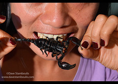 eating a scorpion in Siem Reap, Cambodia (jitenshaman) Tags: travel food asian restaurant crazy asia cambodia cambodian khmer tail insects bugs gourmet scorpion eat scorpions destination siemreap stinger bizarre worldlocations