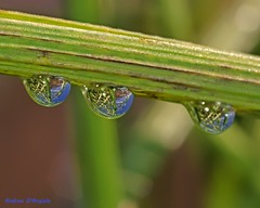 Under a blue sky (Darea62) Tags: drops droplets grass sky reflections nature rain