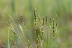 Field of green (norasphotos4u) Tags: macro flickr social flowersplants canon6d canonef100mmf28lisusmmacro noraleonard