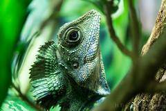 Green on Green (H. Evan Miller) Tags: green animal zoo reptile sony denver lizard alpha nex a6000 hevanmiller ilce6000