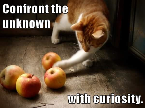 Confront the unknown with curiosity