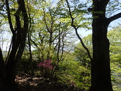 P5050018 (mizuiyoshimitsu) Tags: jp  saitamaken urayama