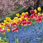 Princes St Garden Spring