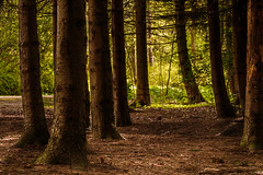 Kralingse bos (Wessel...) Tags: netherlands forest canon rotterdam nederland natuur bos kralingen kralingseplas