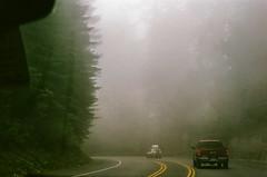 45470005 (danimyths) Tags: california trees mist film fog forest coast roadtrip pch redwood westcoast californiacoast filmphotography pacificcostalhighway