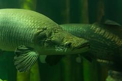 Acuario Agosto 2016 (64) (Fernando Soguero) Tags: acuario zaragoza acuariodezaragoza aragn turismo aquarium nikon d5000 fsoguero fernandosoguero