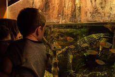 Acuario Agosto 2016 (75) (Fernando Soguero) Tags: acuario zaragoza acuariodezaragoza aragn turismo aquarium nikon d5000 fsoguero fernandosoguero