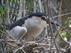 P2230379 (Gareth's Pix) Tags: aviarionacionaldecolombia baru colombia aviario bird