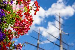 Blooming / Rigged @londonlights (London Lights) Tags: londonlights bloomingrigged london lights londres londra flowers rigging